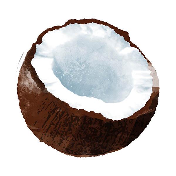 NoMoo: Illustration für Kokoseis